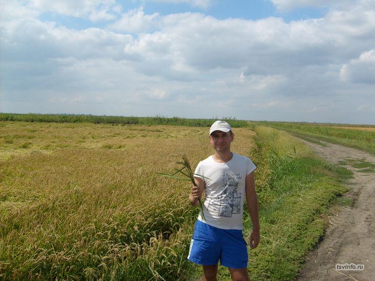 Урожай риса!