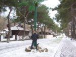 Зима пришла, кокосы так и не поспели:-)
