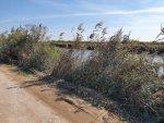 Дорога вдоль канала (04.10.2020)